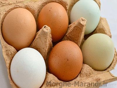 انواع تخم مرغ ها