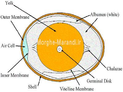 ساختار تخم و شرایط تخم مناسب جوجه کشی