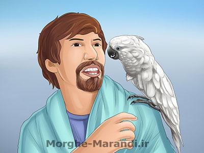 بازگرداندن پرنده به قفس