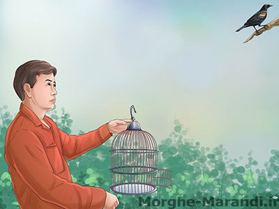 قفس پرنده خود را به منطقه ای که او را یافتید بیاورید