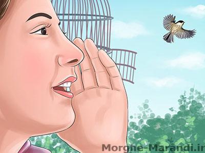 پرنده را با کلمات کشیده اما بلند صدا کنید
