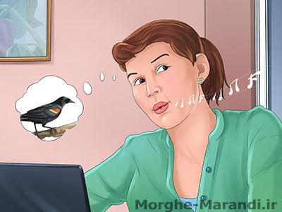 پرنده گمشده را با سوت زدن و استفاده از کلمات صدا کنید