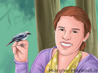 یک پرنده خانگی دیگر را با قفسش با خود ببرید