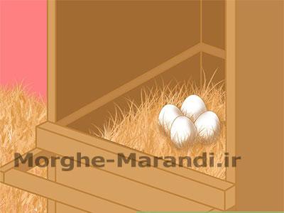 شکستن عادت خوردن تخم مرغ توسط مرغ